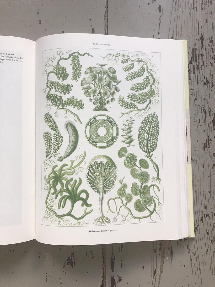 Seaweed | Ingeborg Meijssen
